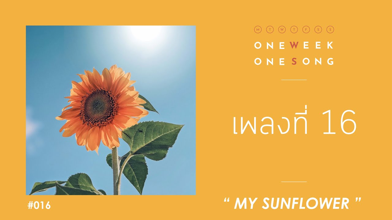 เพลงที่ 16 [ My Sunflower ] - One Week One Song